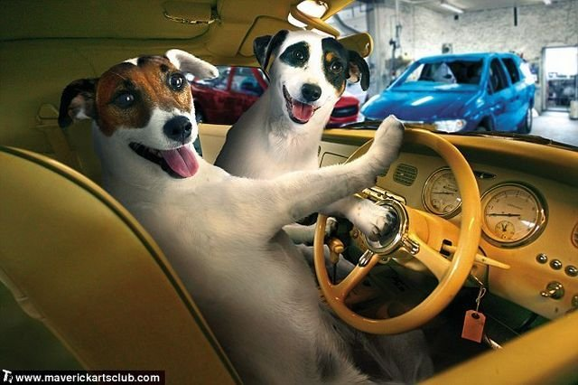funny dogs at a repair shop 01